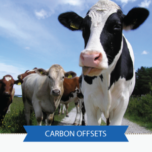 Carbon Offsets for Individuals and Families