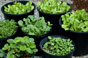 reduce the carbon footprint with container gardening