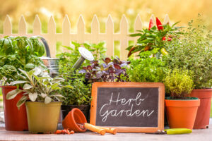 Reduce the carbon footprint with a herb Garden