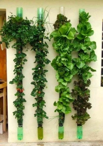 Vertical gardening to reduce your emissions