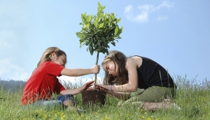 reduce the carbon footprint by planting a tree