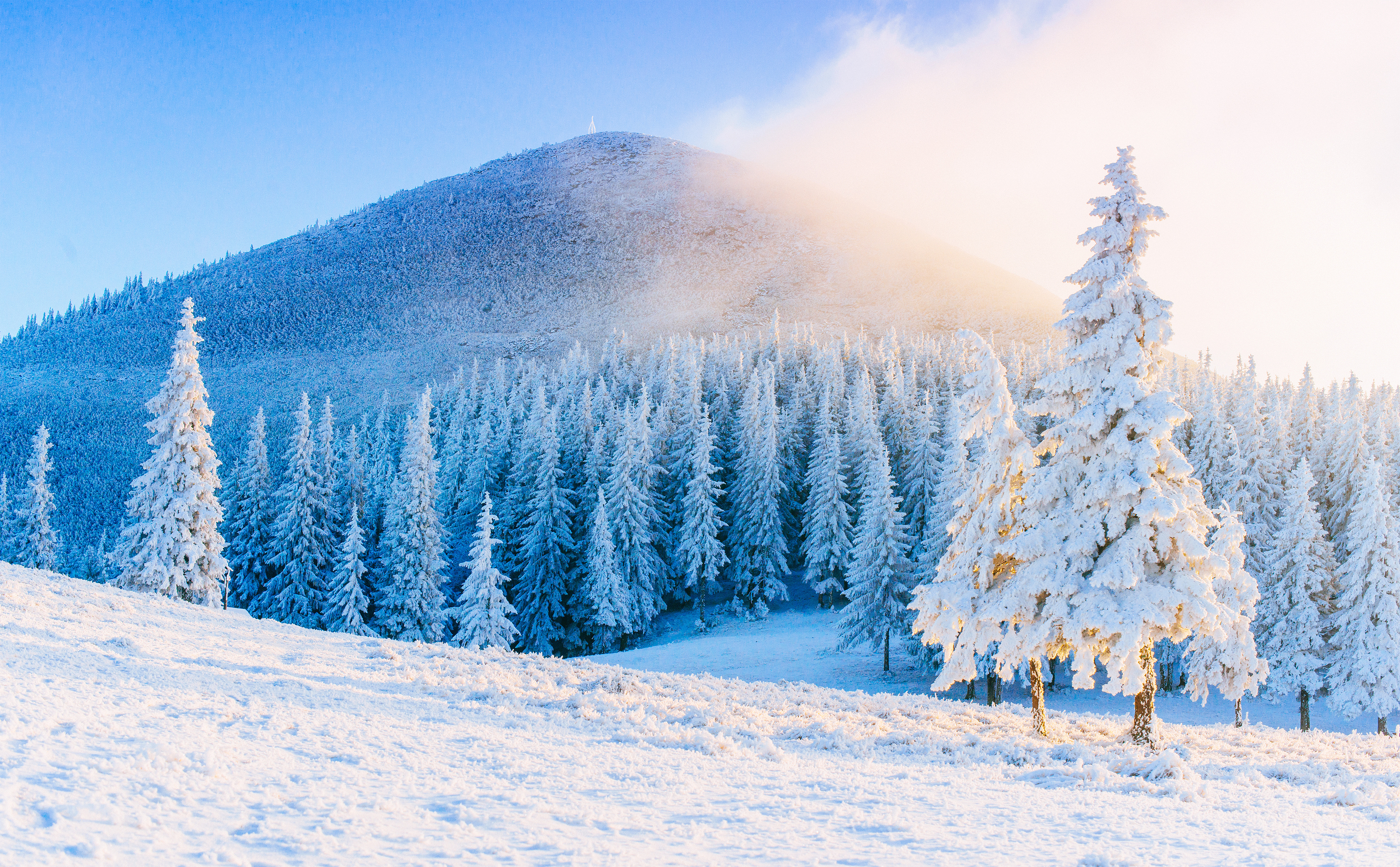 Snow filled forest