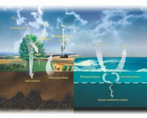 Global Carbon Cycle | Reduce Climate Change