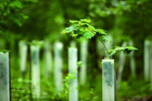 Business Carbon Offsets | Carbon Emissions