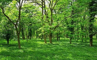 Forests for Life: Natural Carbon Removal and Sequestration