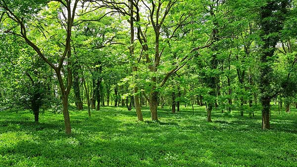 Forests Natural Carbon Removal