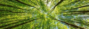 Carbon Offset   Forest Angle Photograph