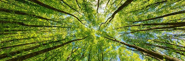 Carbon Offset | Forest Angle Photograph