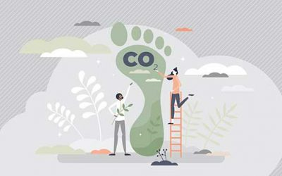What Are Carbon Offsets, and Why Are They Important?